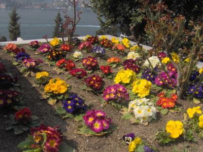 Çiçeklendirme 12
